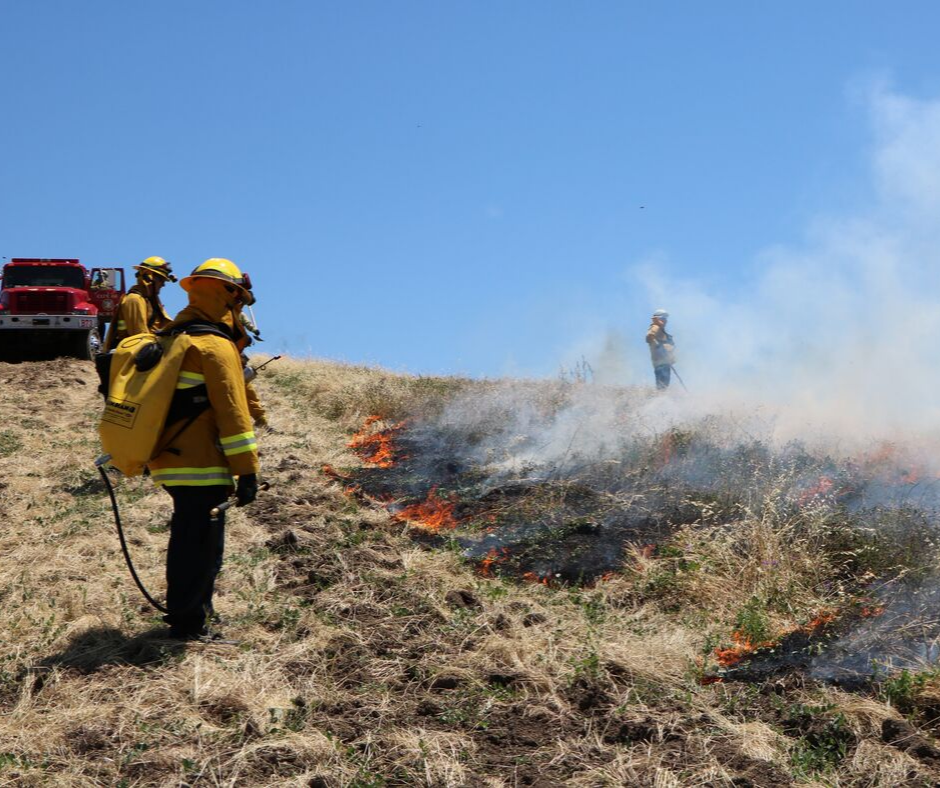 Picture of fire fighters doing controlled burn