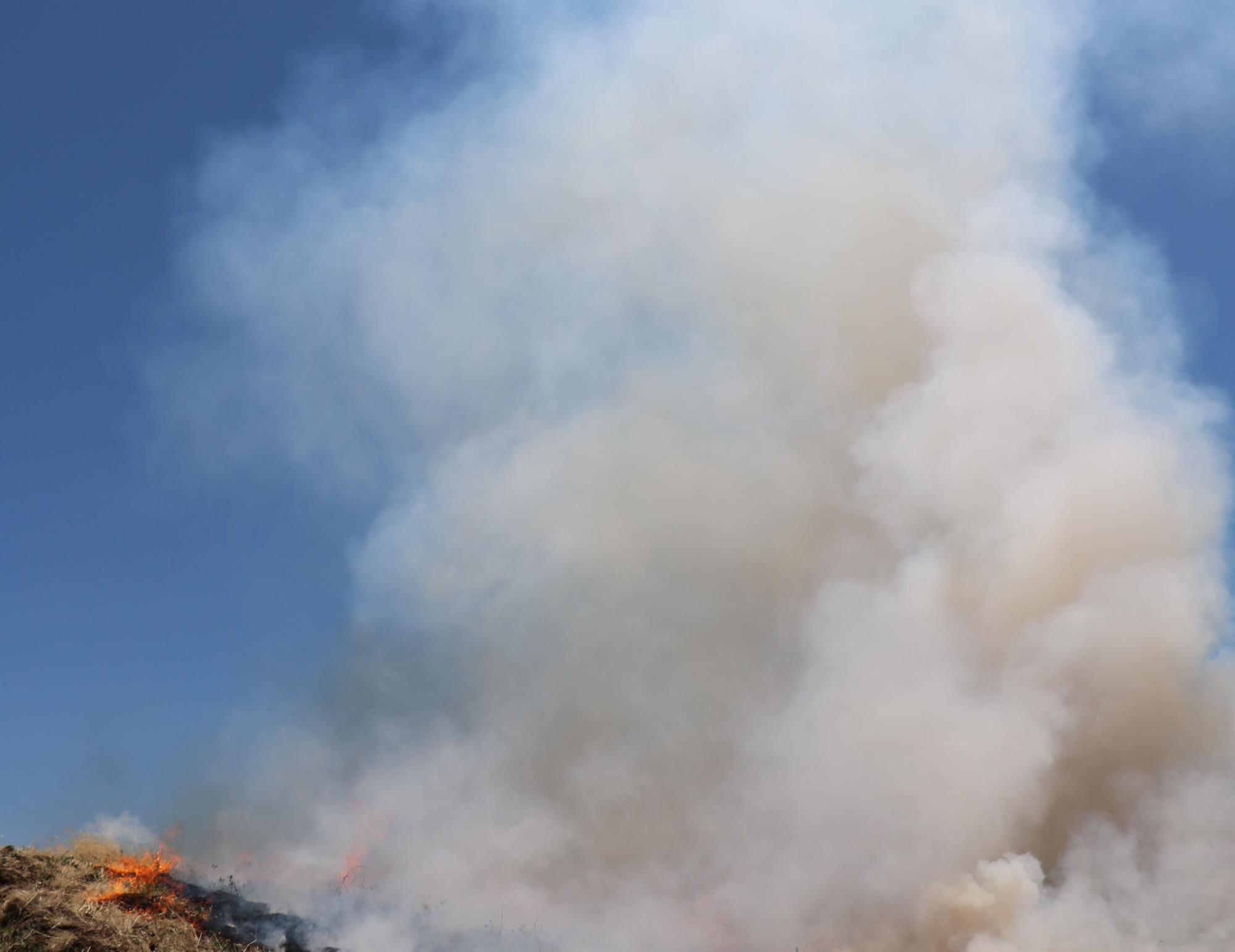 picture of controlled burn