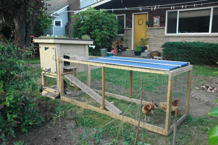 Image of a typical backyard chicken coop